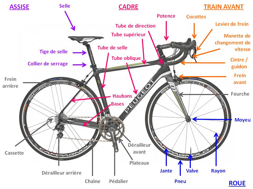 Anatomie velo