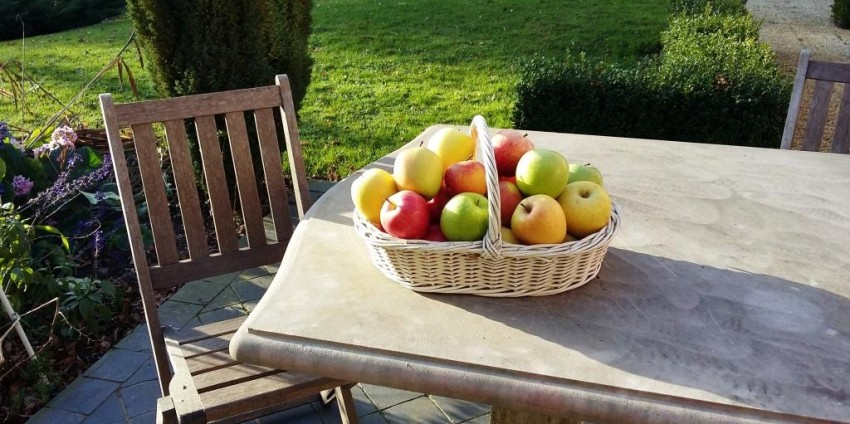 Monodiète à la pomme